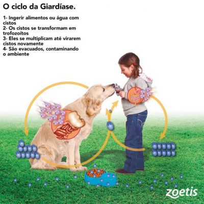 Giardiavax zoetis. Inverted papilloma and nasal
